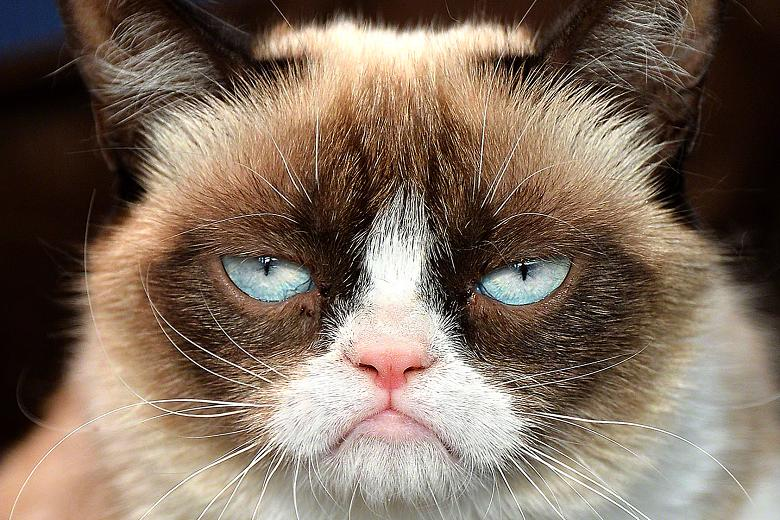 Grumpy Cat (source : freeallimages.com/grumpy-cat-no/)